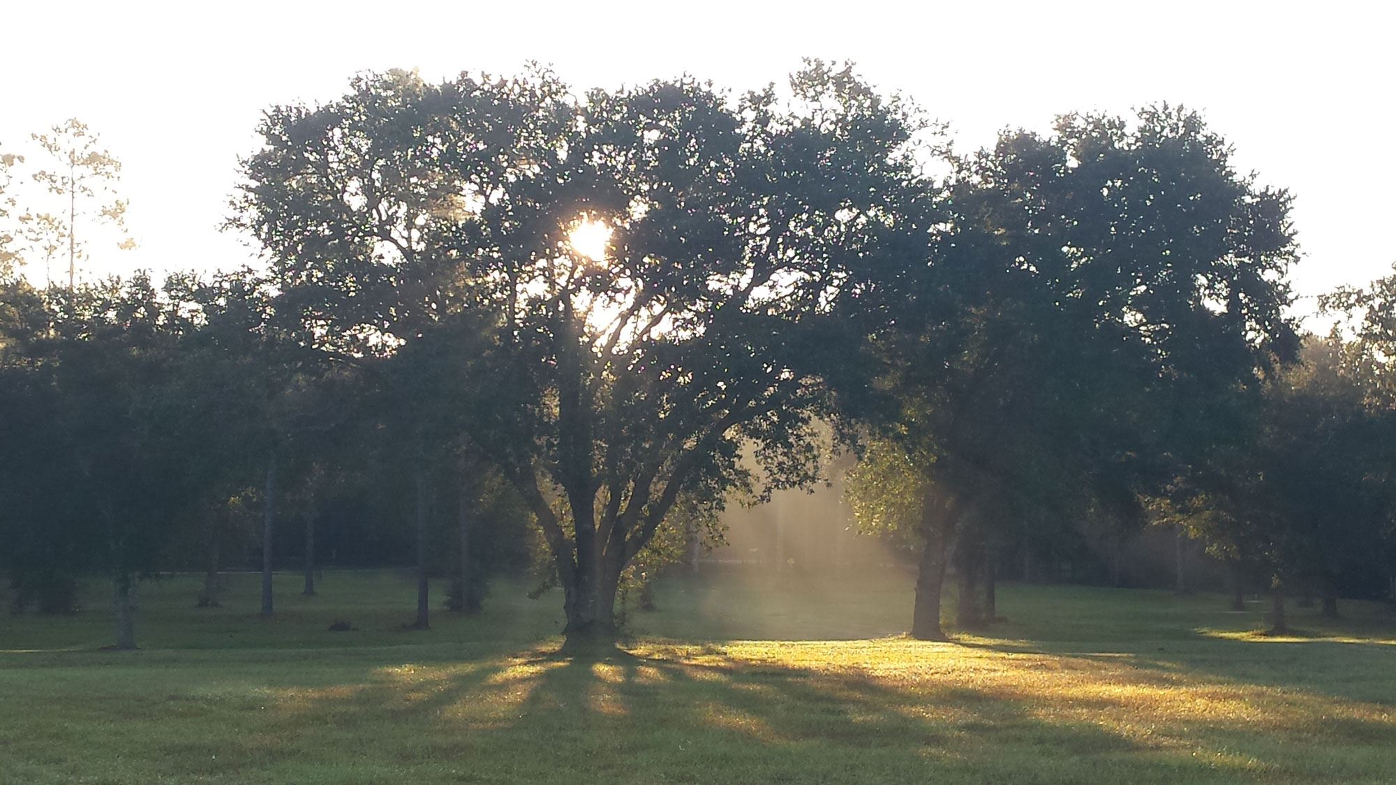 tall oak trees in a field spreading their leaves in worship to God