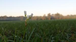 Flower-dew_