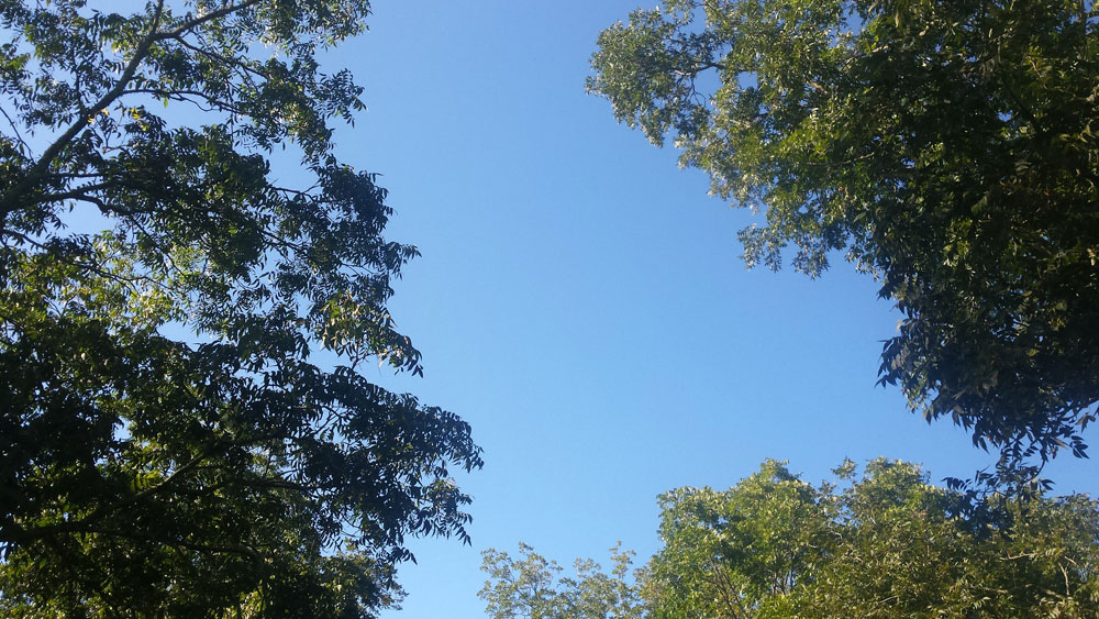 View of blue sky from looking up from the ground with surrounding pecan and oak trees