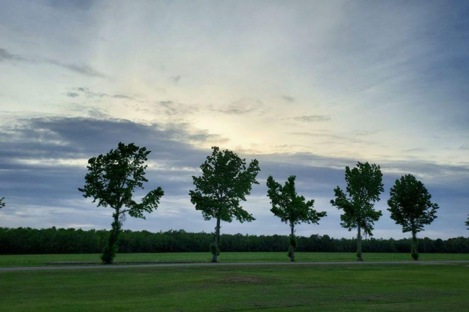 Oak trees in a line before a setting sun