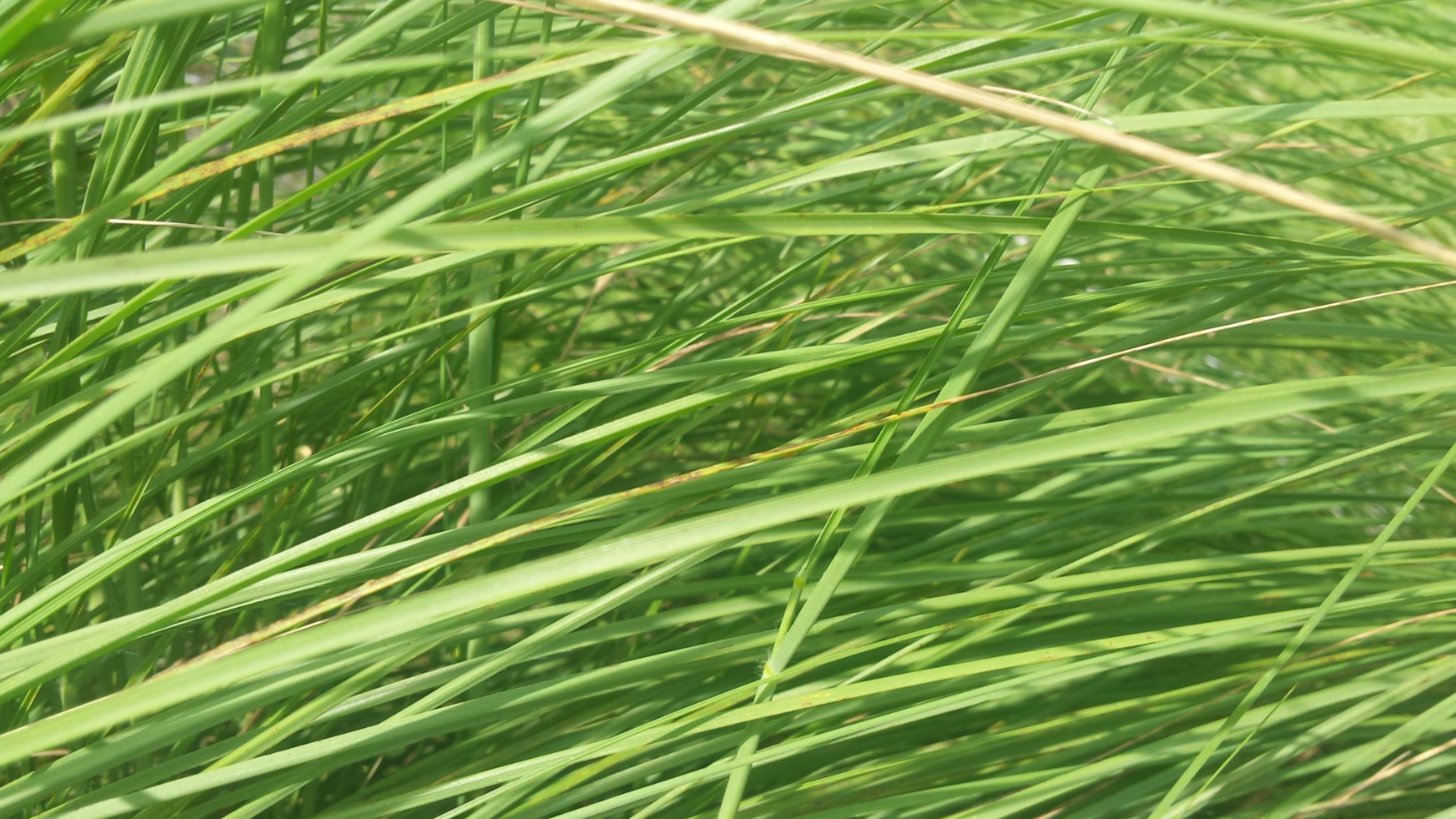 long green grass blades bent over one another, covering injustices and provdiing a soft bed of mercy
