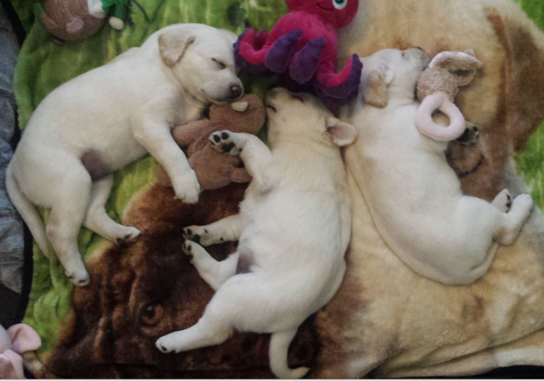 three puppies naping on a soft fur, completly content and safe.
