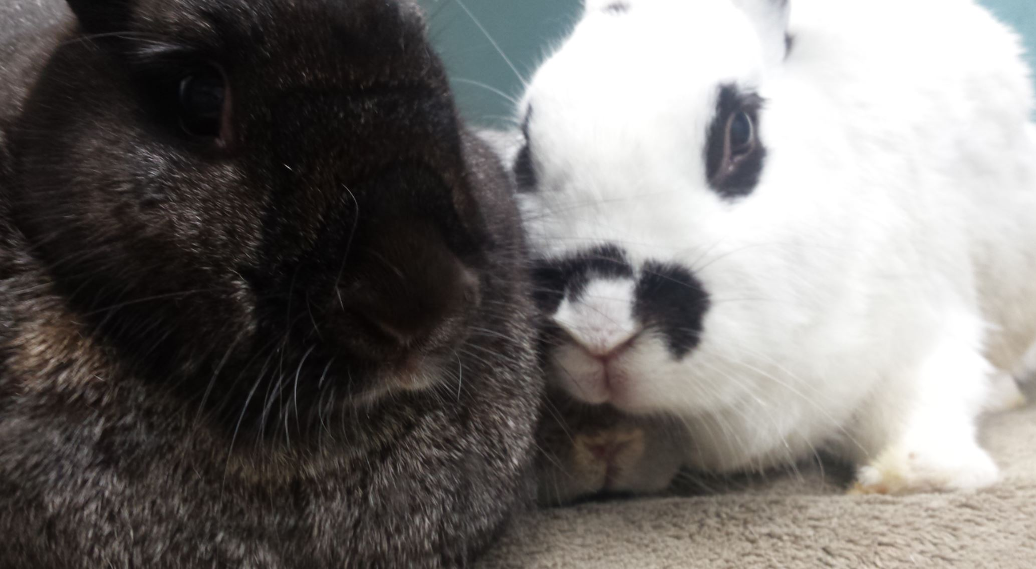 three bunnies snuggled together in intimacy