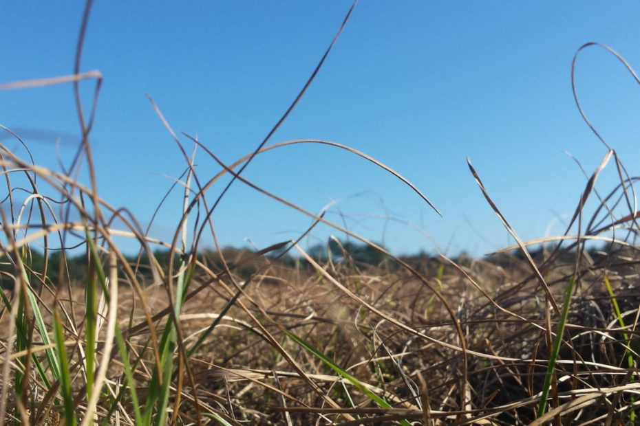 field covered with brown grass tangeled up looking up to clear blue sky